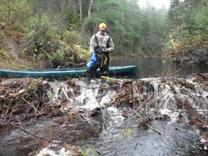 Tyler Coughlan marks the location of an active beaver dam for the trapper