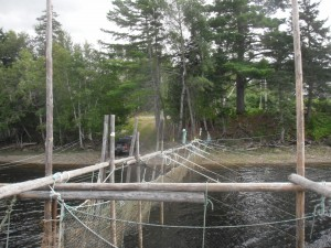 Cassilis Smolt Trap