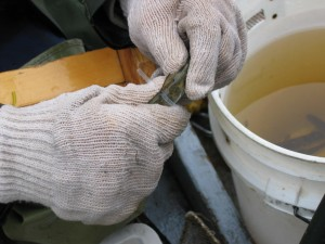 Tagging a Smolt
