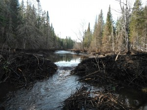 Beaver Dam on Mill Stream after Breach - 2013