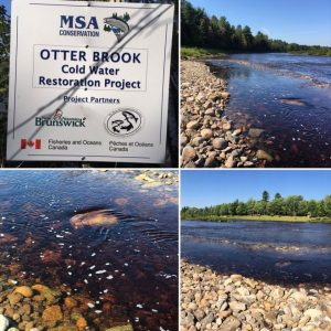 Otter Brook September 2015